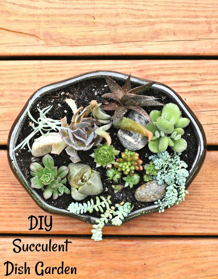 This DIY succulent planter makes a great dish garden
