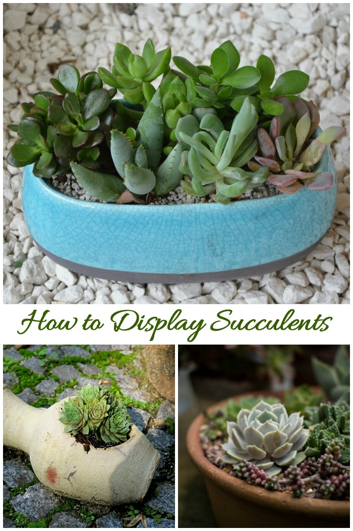 Tips for displaying succulents. Click through for some creative ideas.