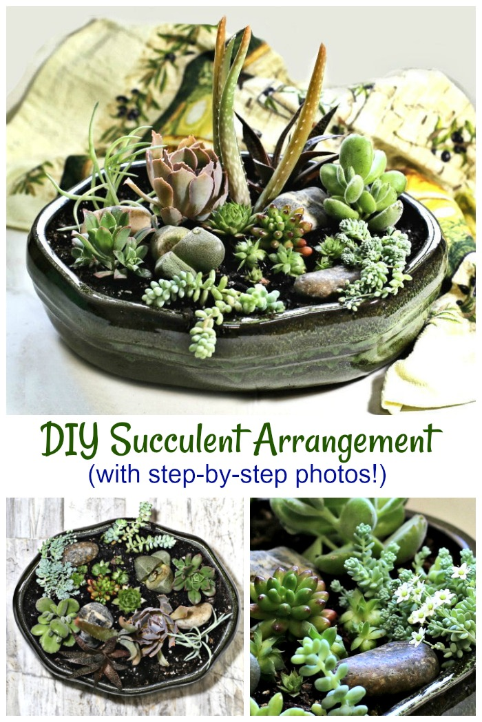 Tutorial for a DIY succulent arrangement.