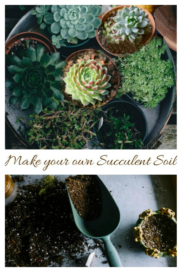 Make your own succulent soil with just a few ingredients.