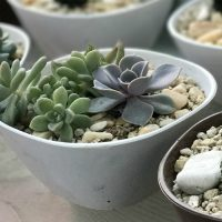 Tips for growing succulents