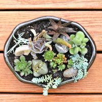 Dish garden for succulents
