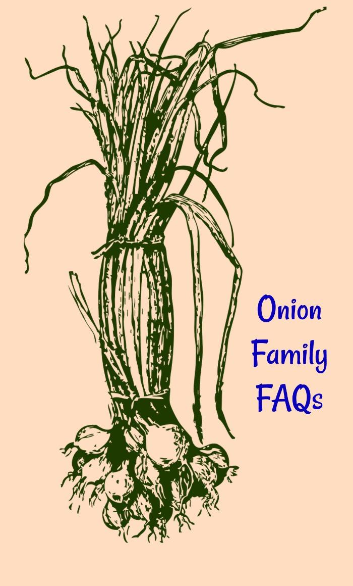 Onion Family FAQs