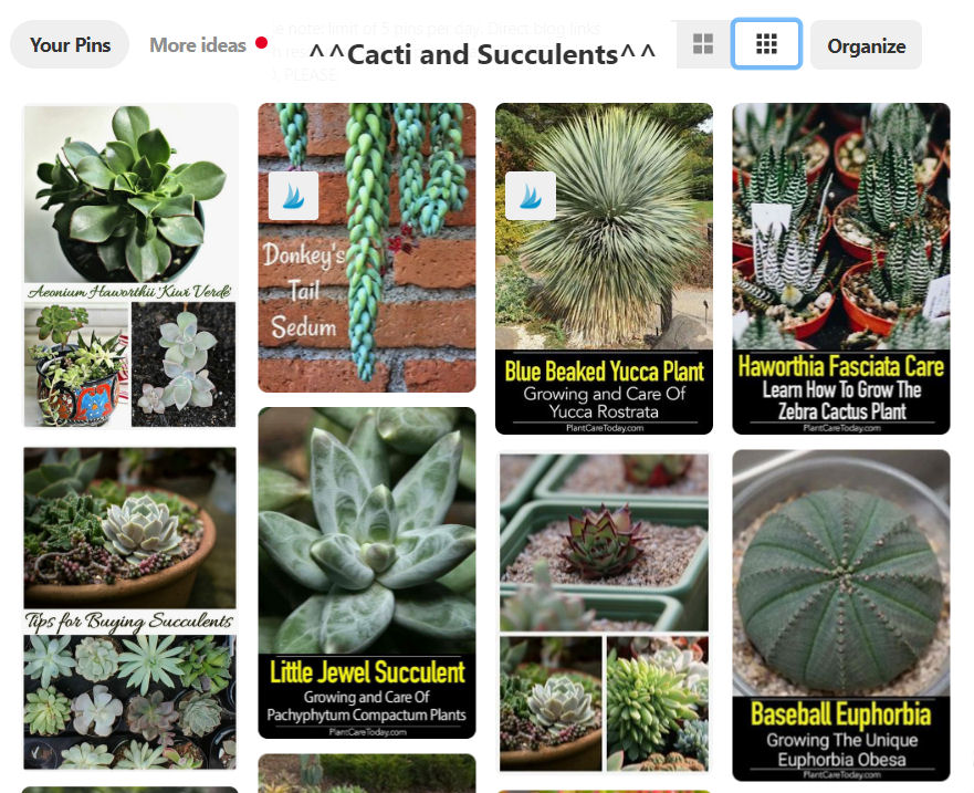 Pinterest succulent and cacti board