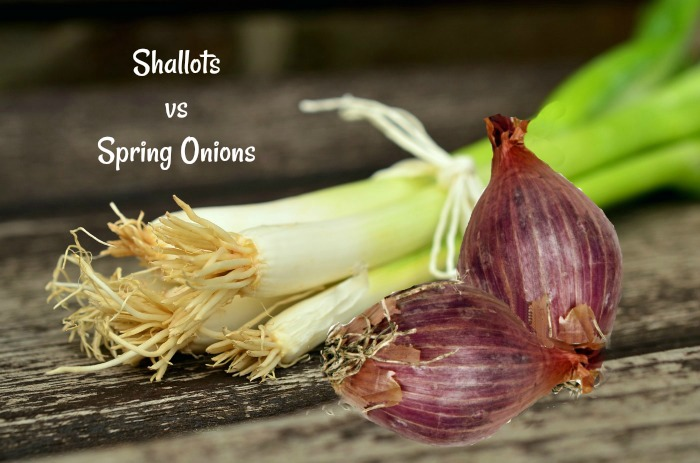 How do shallots and spring onions differ?