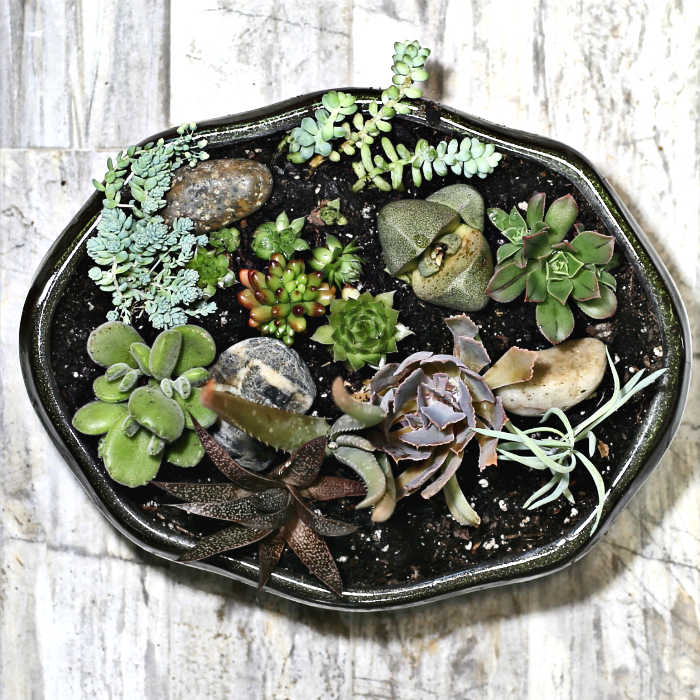 Top view of a green planter filled with succulent plants.