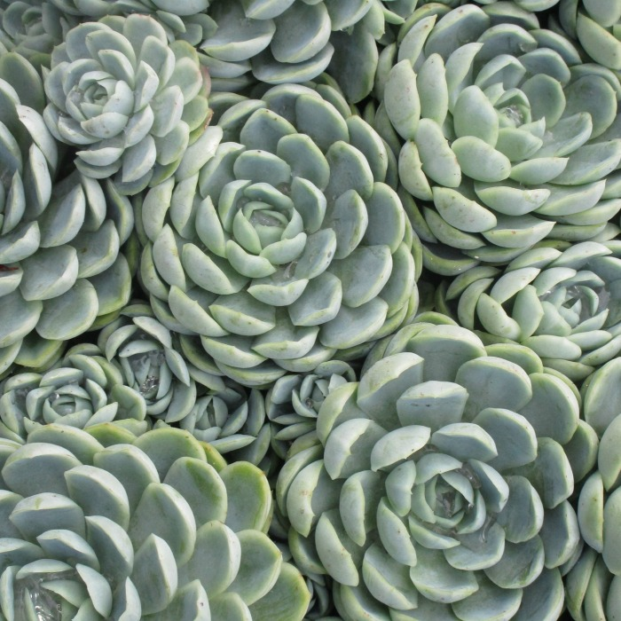 What is a succulent? Find out all about them and why they are so popular.