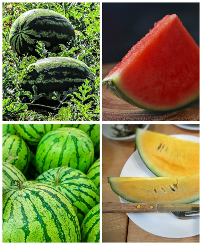 4 Main types of watermelons