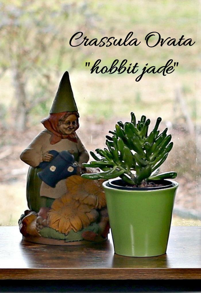 Tom Clark Gnome statue and hobbit jade succulent