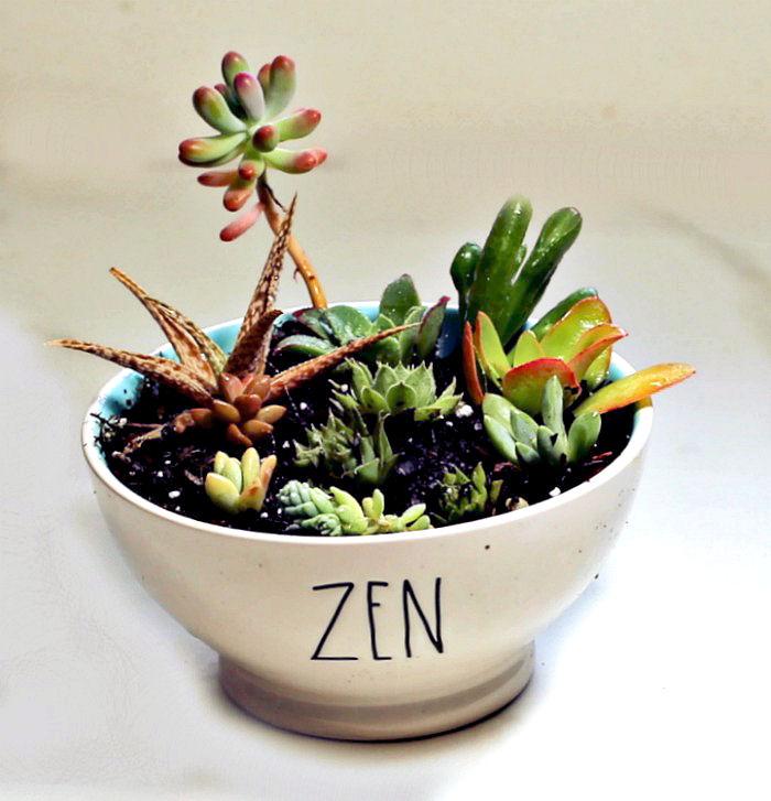 Zen dish garden with Hobbit Jade plant and other succulents