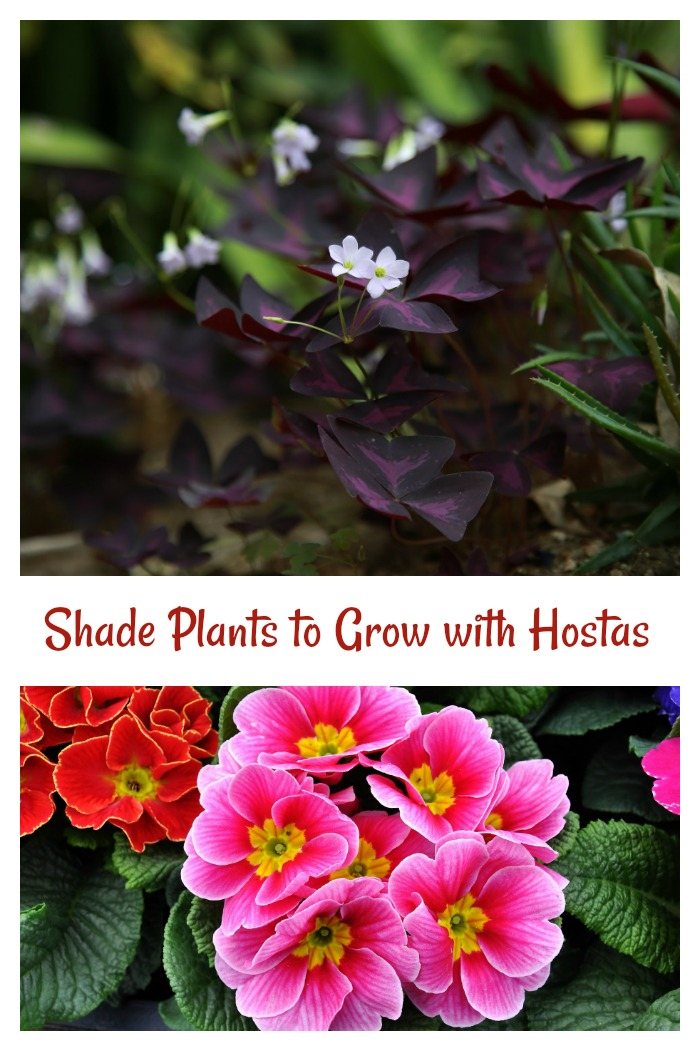 companion plants for hostas that love the shade