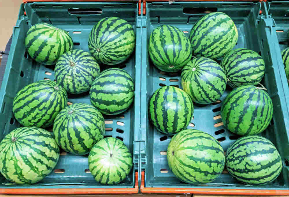 Miniature watermelons in crates.