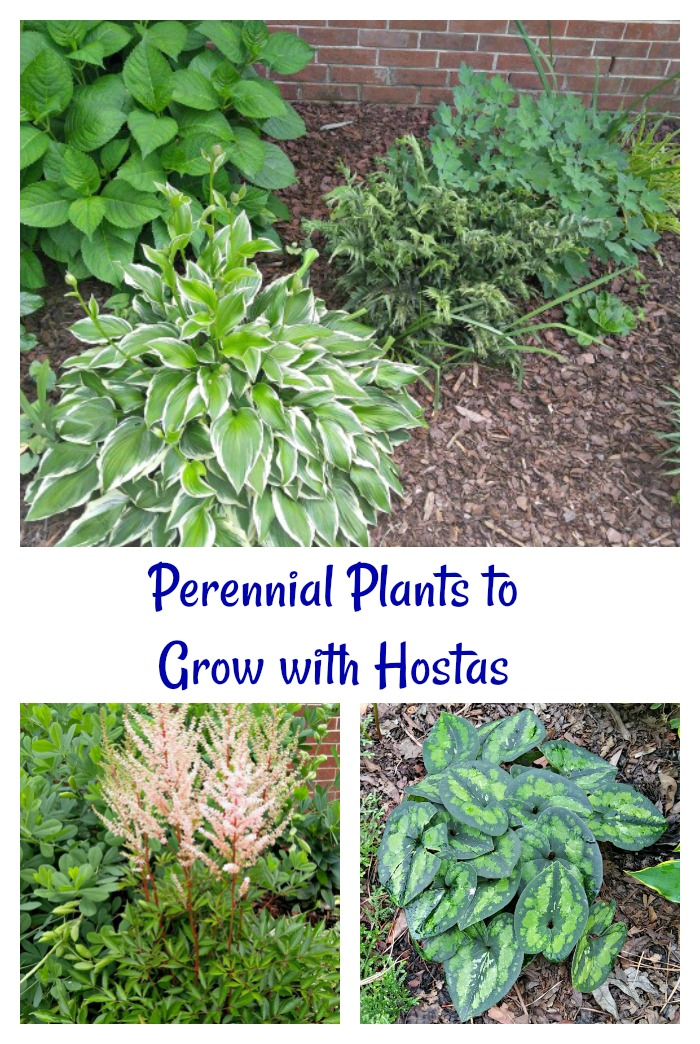 Perennial plants to grow with hosta