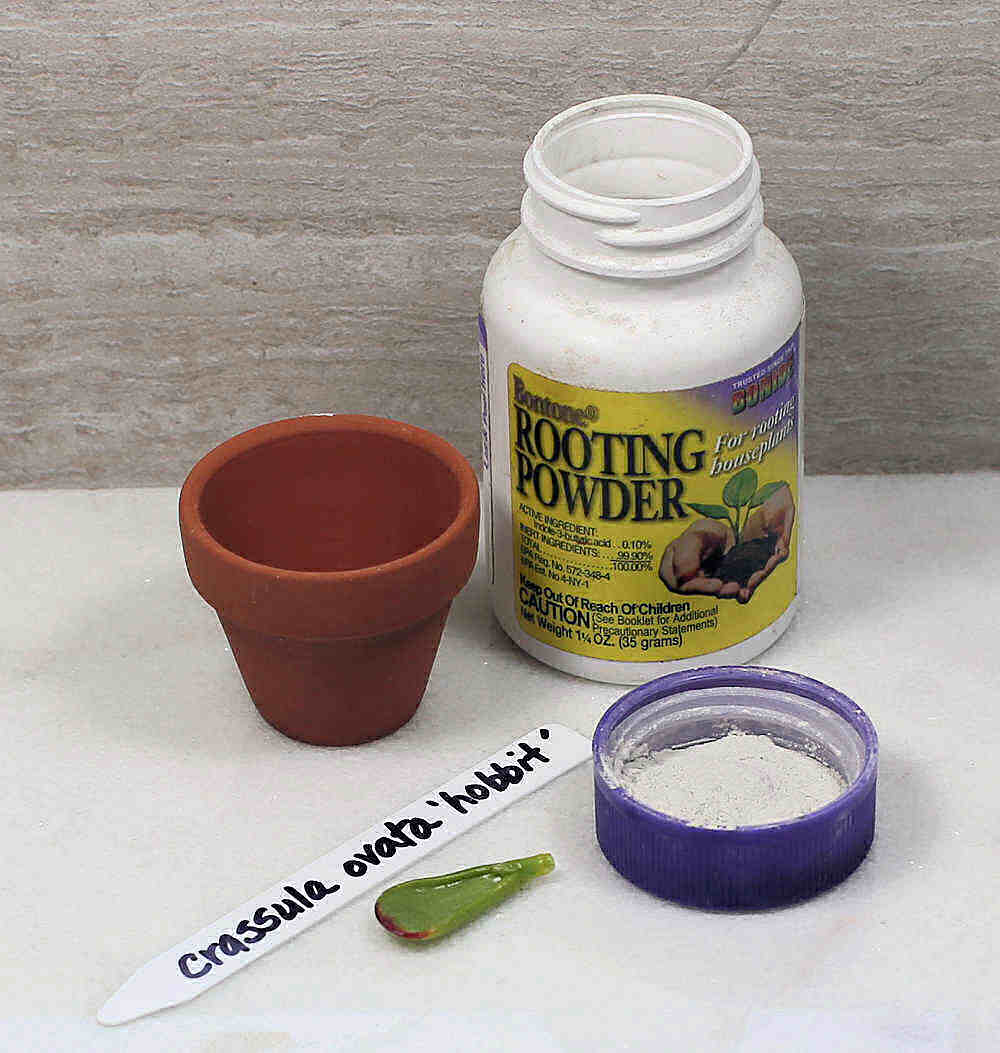 Plant pot, rooting powder, plant tag and leaf of finger jade.