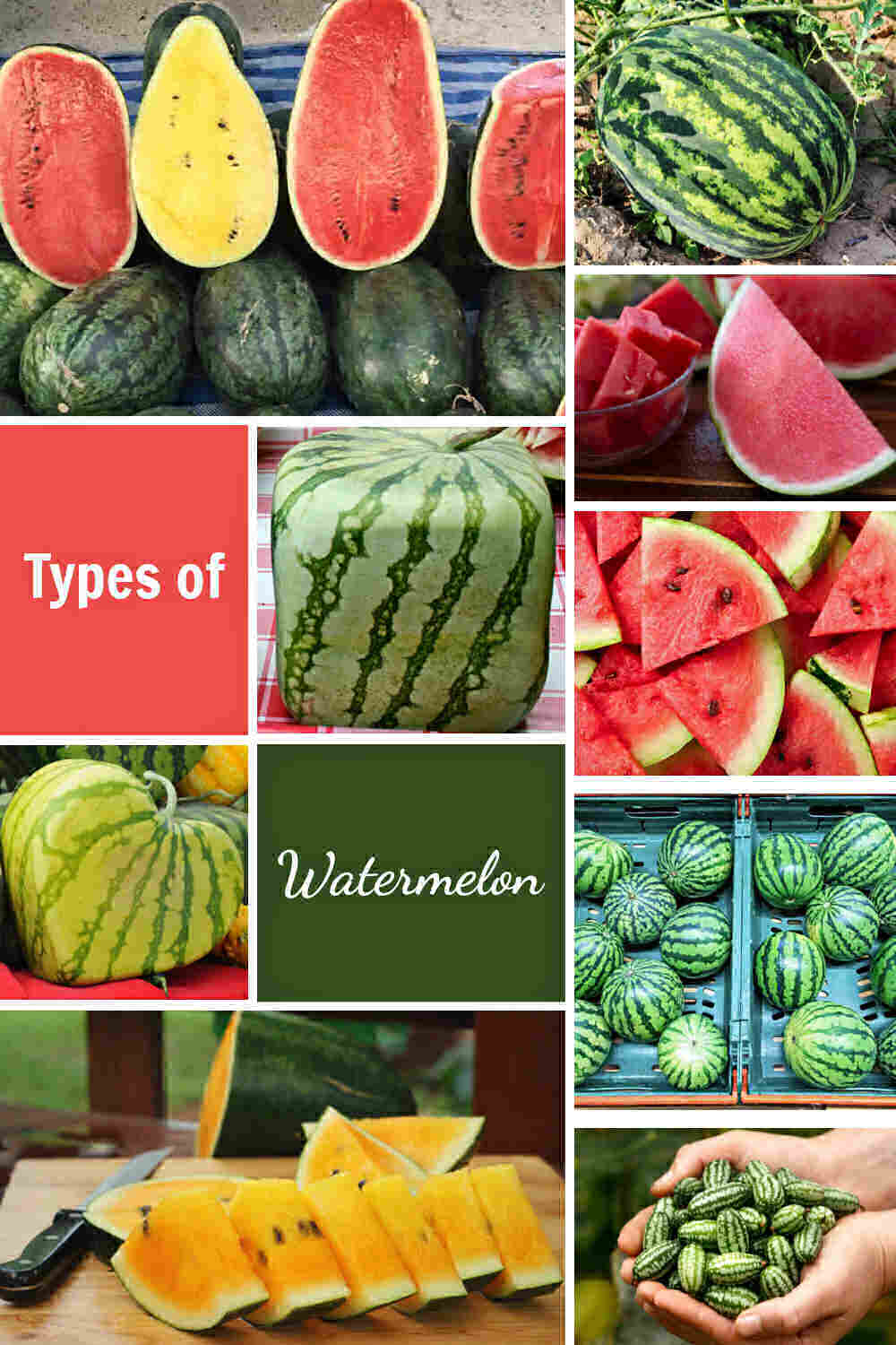 Collage with varieties of watermelons and words Types of Watermelon.