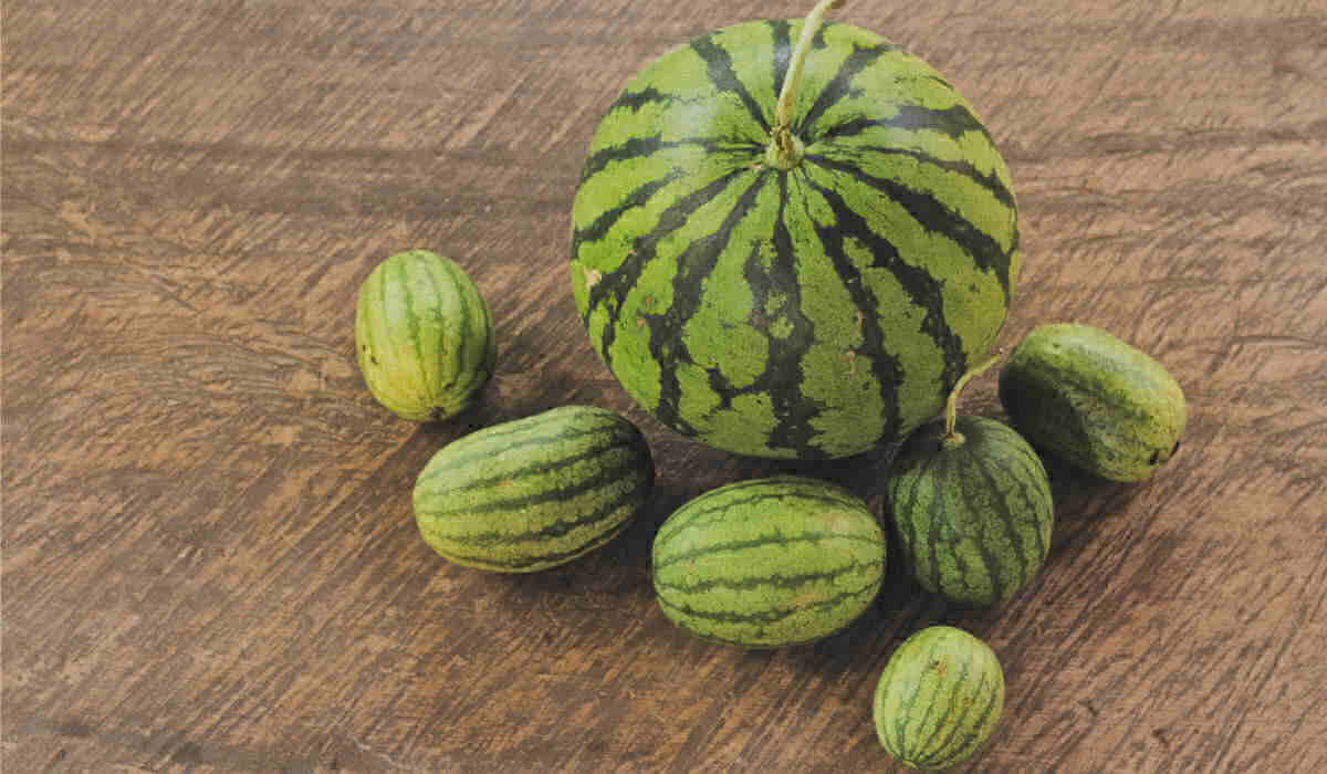Different types of watermelon on a wooden floor.