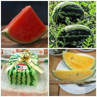 Types of Watermelons