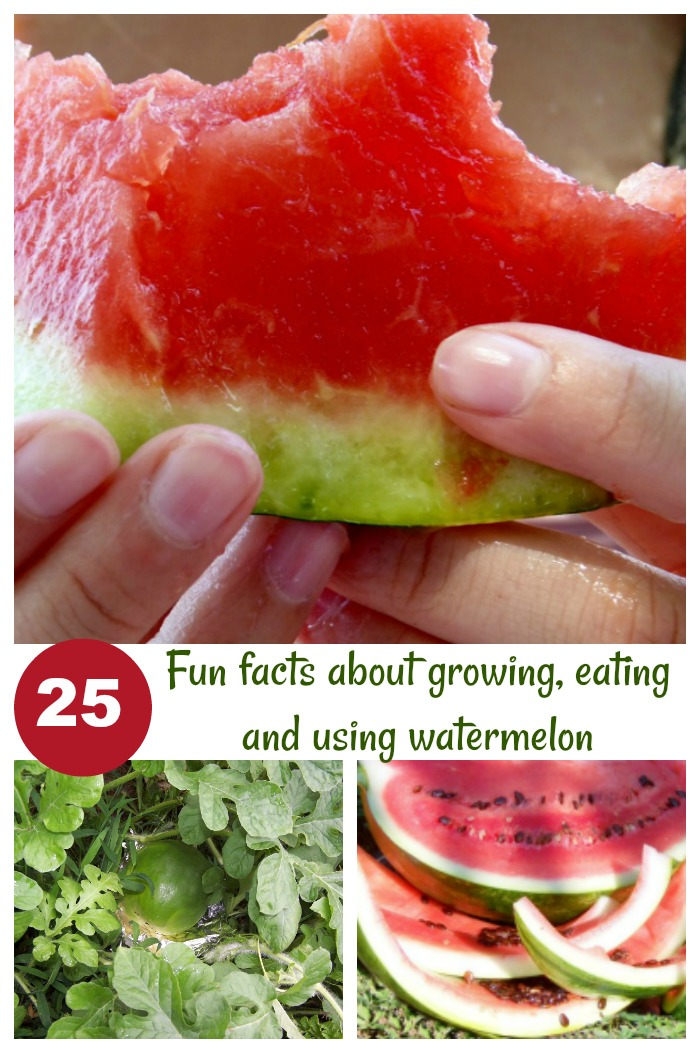 25 Fun facts about growing using and eating watermelon