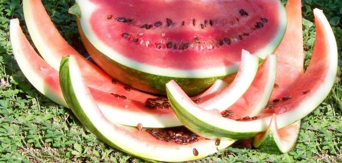 Watermelon rinds and seeds in the sunlight