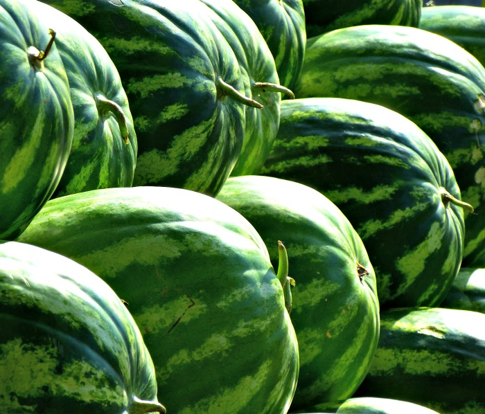 Watermelon season runs from May to September