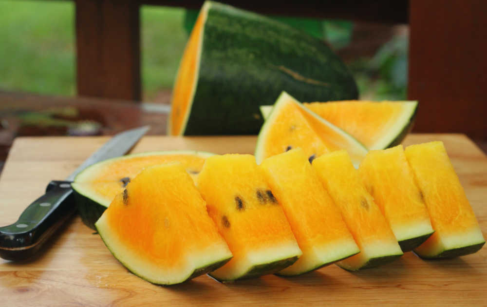 Yellow flesh watermelon cut into pieces with a sharp knife.