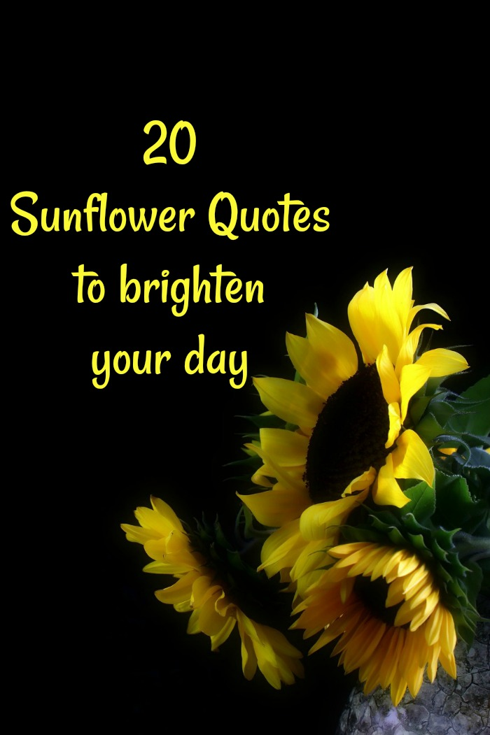 20 Sunflower Quotes to Brighten Your Day