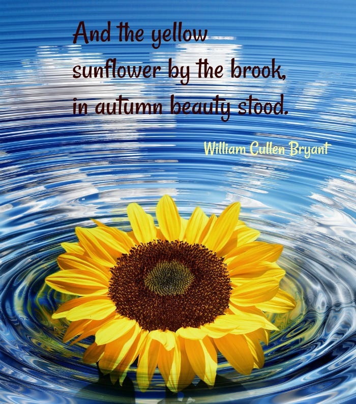 Autumn sunflower quote