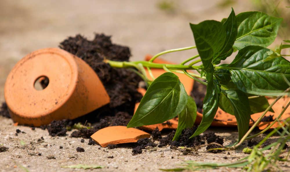 Broken terra cotta pot with dirt.