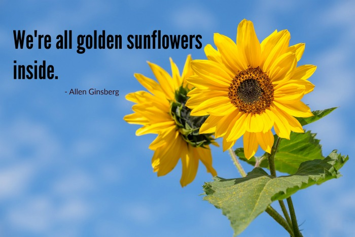 Golden sunflowers graphic