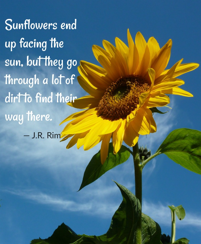 Sun facing sunflower with saying by J.R, Rim
