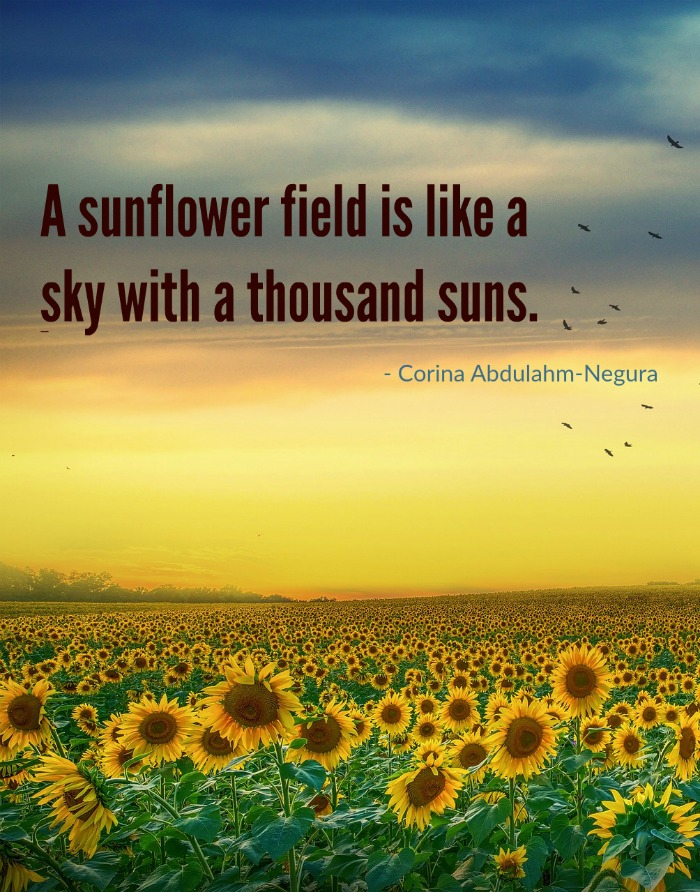 Sunflower field quoter