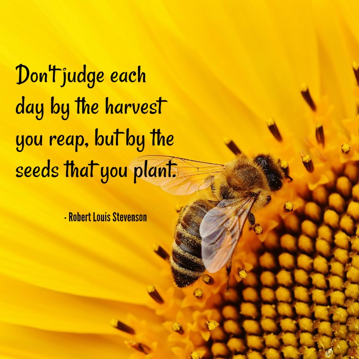 Robert Louis Stevenson Quote on a sunflower with a bee