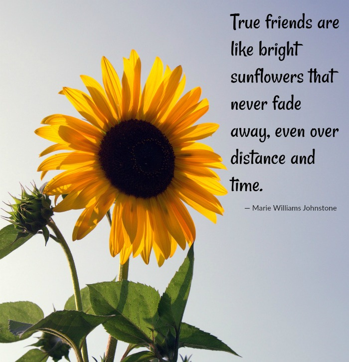 true friends sunflower quote