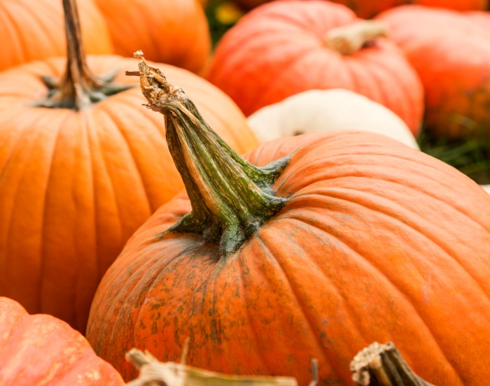 Choose a pumpkin for carving with a green stem.