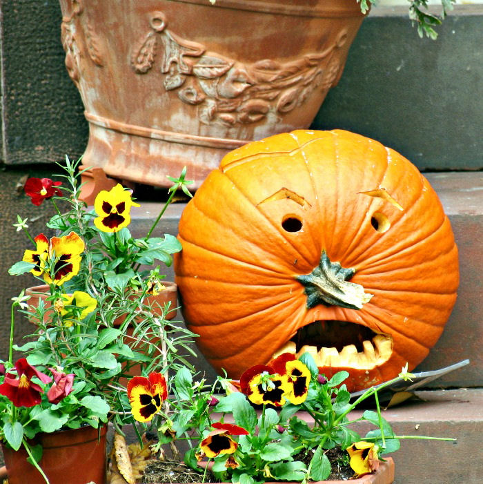 Pumpkin carving with stem used as nose on a porch with pansies.