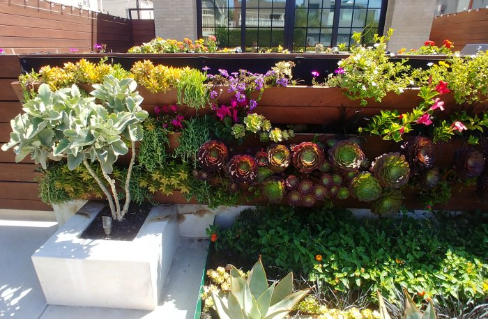 Succulent wall on Venice Beach canals