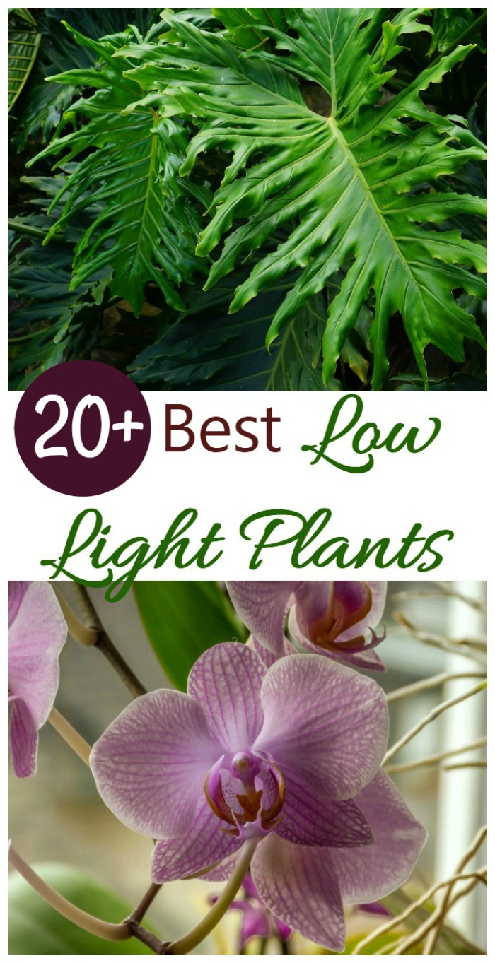 20+ best low light indoor plants