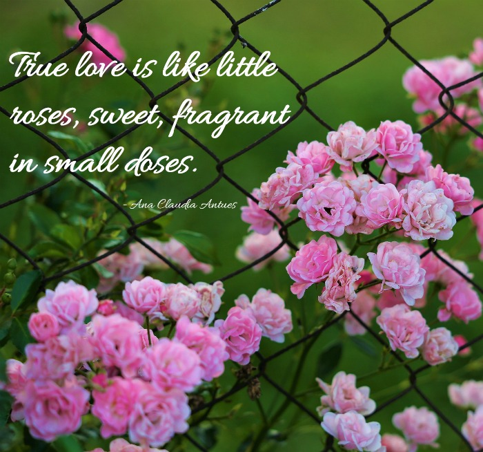 "True love is like little roses, sweet, fragrant in small doses."" - quote by Ana Claudia Antues"