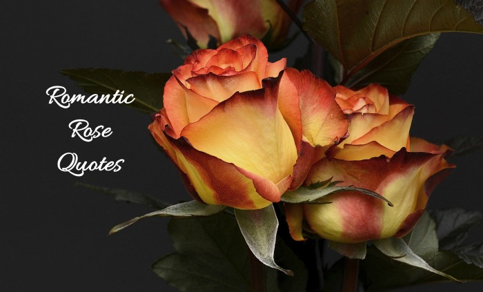 Romantic Rose Quotes for Valentine's Day
