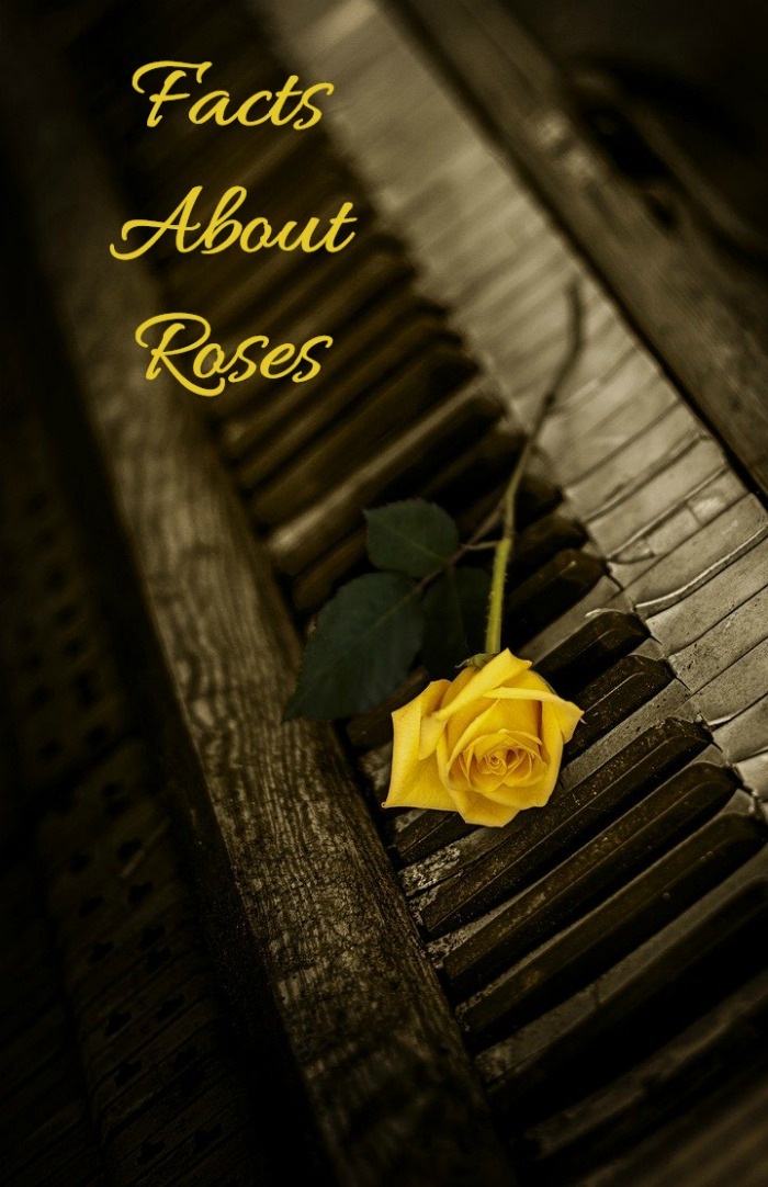 You will be surprised by these fun facts about roses.