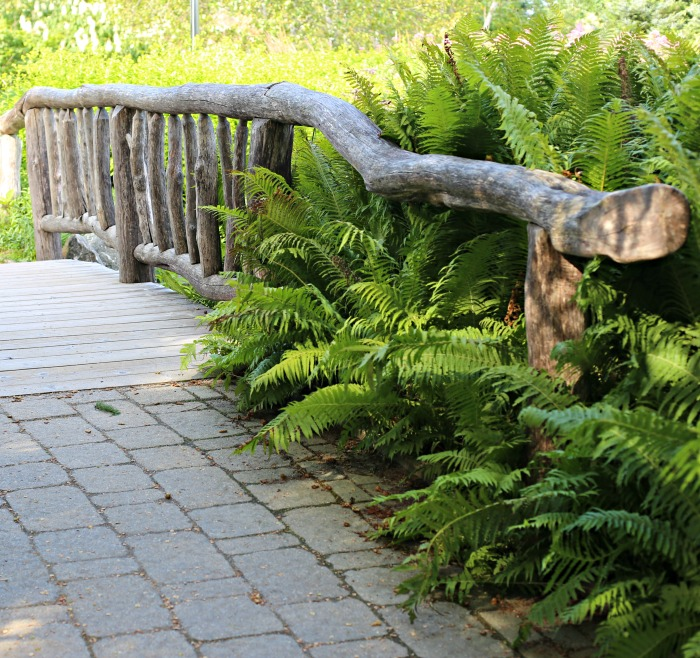 Rustic Bridge - Coastal Maine Botanical Garden in Boothbay Maine