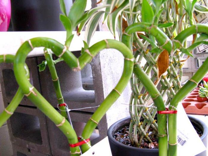 bamboo hearts