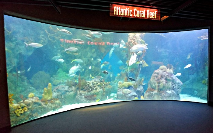 Atlantic Coral Reef Aquarium at ABQ