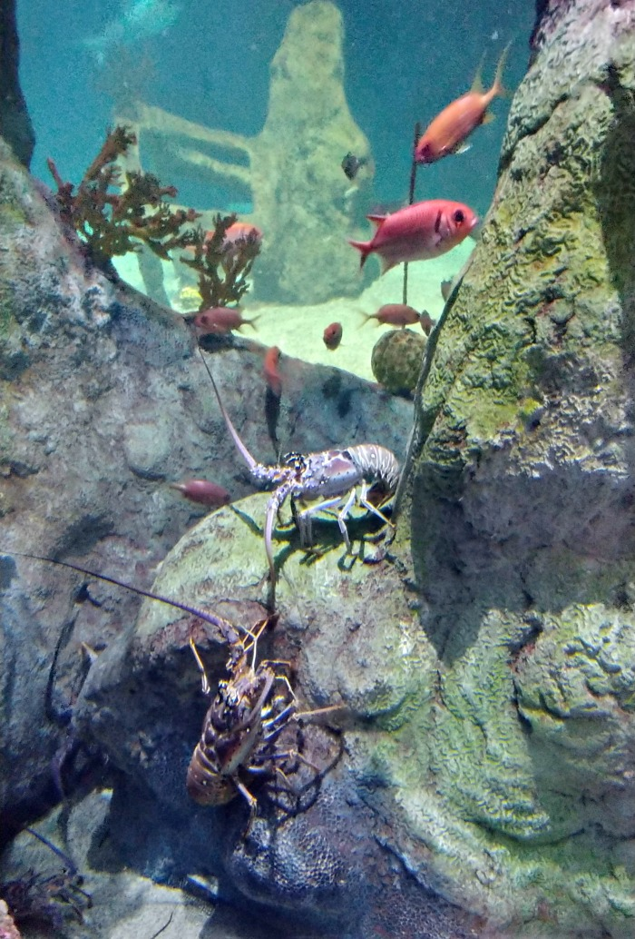 Crustaceans in the ABQ aquarium