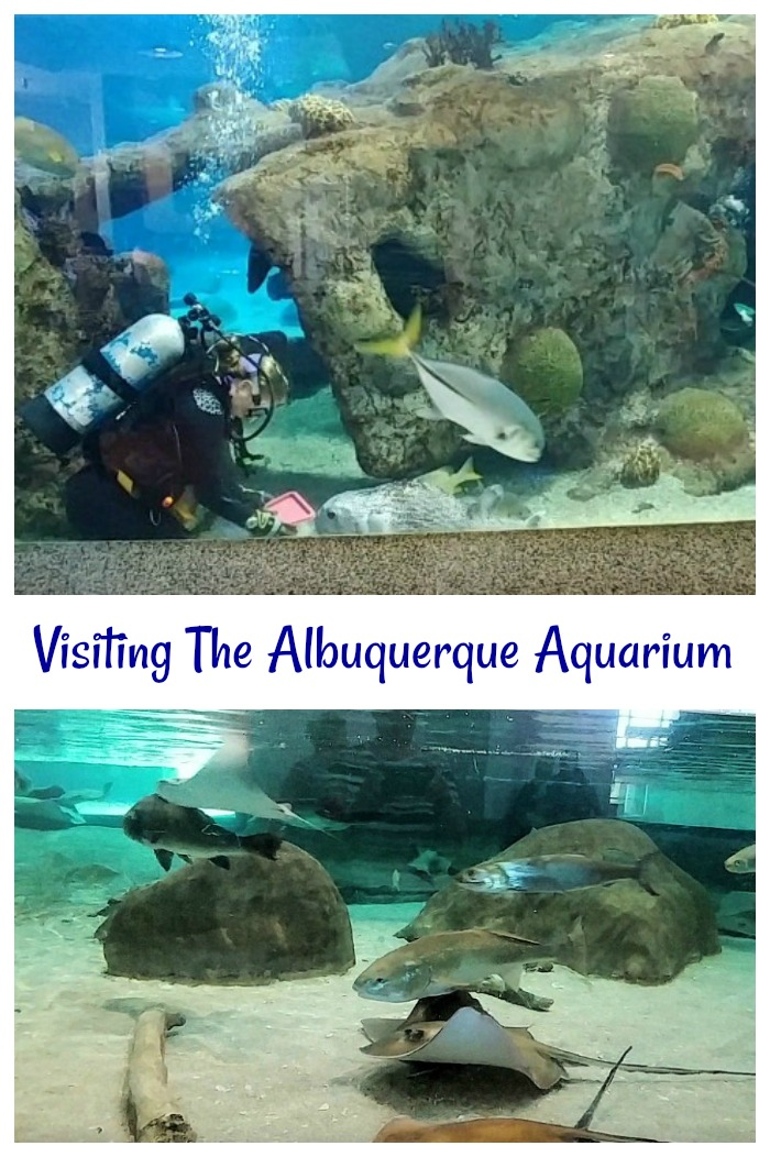 Visiting the ABQ Biopark Aquarium in Albuquerque, New Mexico