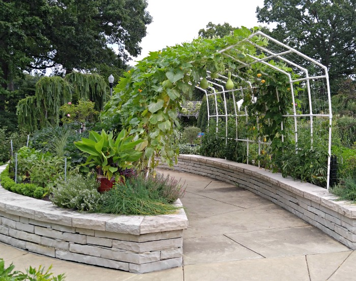 Use arbors to grow hanging vegetables like gourds.