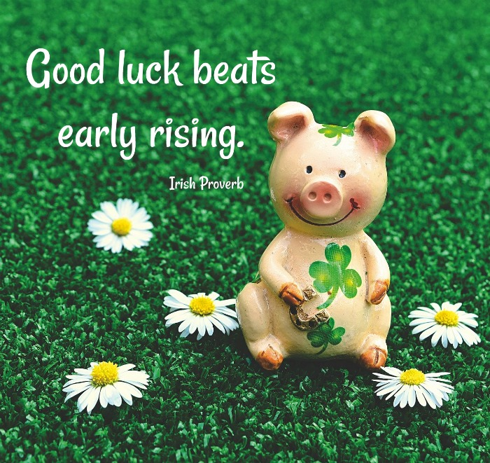 Pig with shamrocks in a field of daisies and shamrocks and Irish Proverb - Good luck beats early rising.