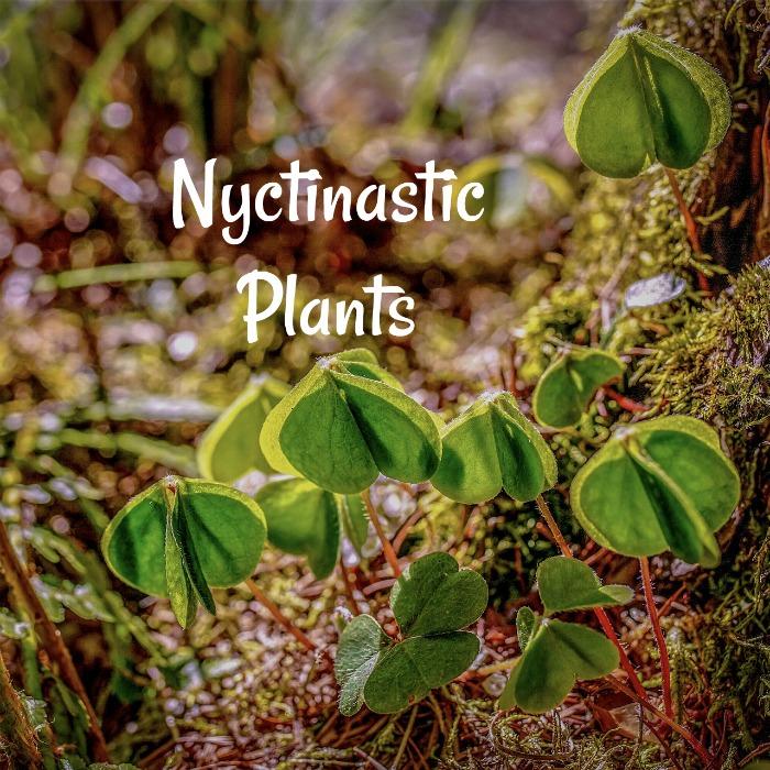 Nyctinastic Plants close up at night