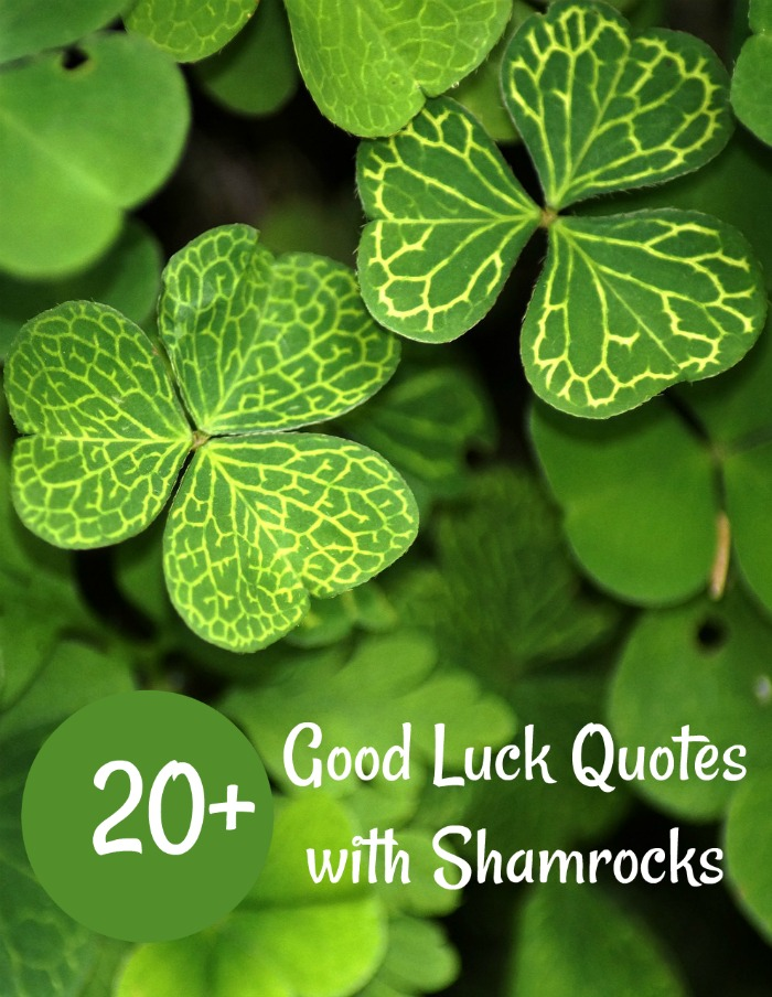Shamrocks with white veins and words 20 good luck quotes for St. Patrick's day