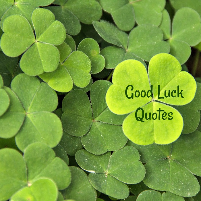 "Shamrock leaves with words reading ""Good luck quotes."""